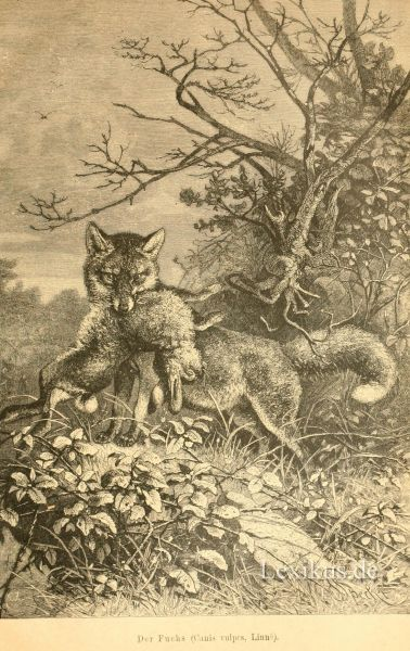 wolf wulf 183 bis 189 lexikus. Black Bedroom Furniture Sets. Home Design Ideas