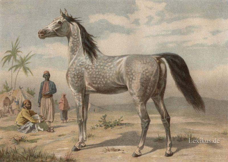 blindes pferd reiten