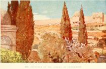 The Cypresses of the Garden of Gethsemane.